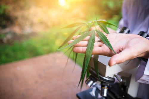 centro de desintoxicación- cannabis